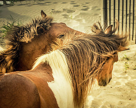Ponies of Assateague Island by Mark Peavy