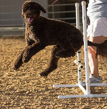 Poodle Jump by Patti Colston