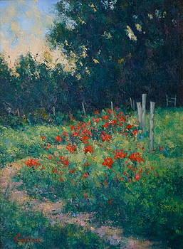 Poppy Garden by Gene Cadore