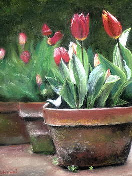 Potted Tulips by Cindy Plutnicki