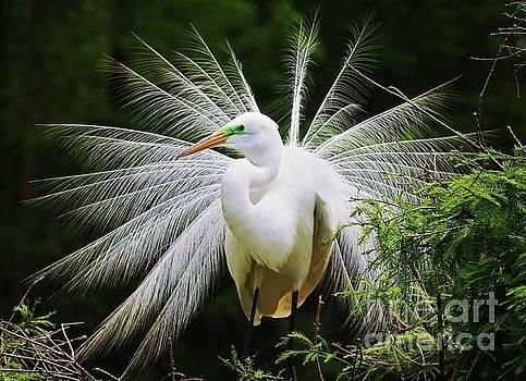 Paulette Thomas - Preening Egret