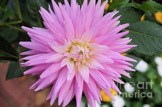 Pretty In Pink by John S