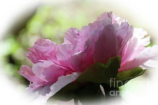 Pretty in Pink  by Yumi Johnson