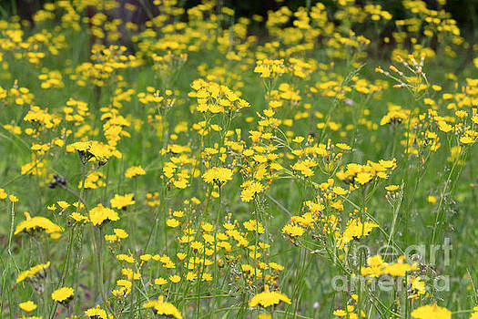 Pretty in Yellow by Kathy DesJardins