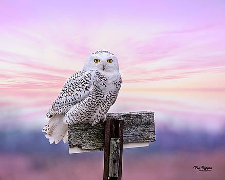 Pretty Perch by Peg Runyan
