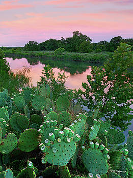 Prickly Pear Cactus by Tim Fitzharris