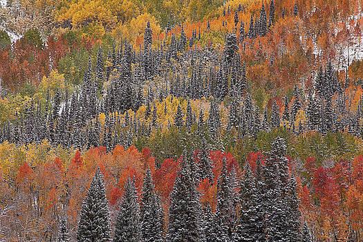 Psychedelic Autumn by Scott Wheeler