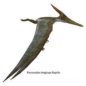 Corey Ford - Pteranodon Reptile Side Profile