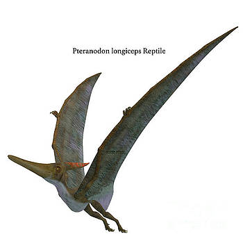 Corey Ford - Pteranodon Reptile Wings Up