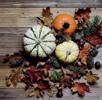 Pumpkins by Rebecca Cozart