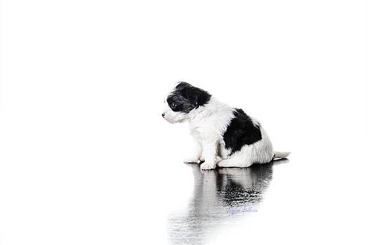Puppy Love by Nena Pratt