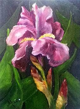Purple Iris by Joan Mace
