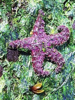 Purple Starfish by Julie Rauscher