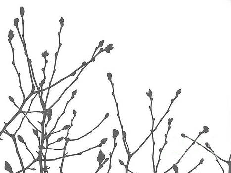 Pussy Willow by Andrea Kollo