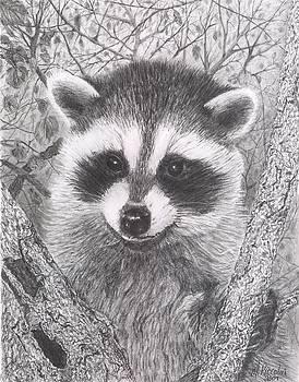 Raccoon Kit by Marlene Piccolin