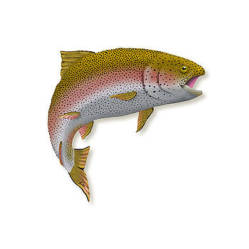 Rainbow Trout 1 by Agustin Goba