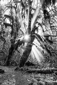 Jamie Pham - Rainforest Magic