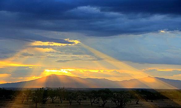 Rays From Heaven by Kimmi Craig