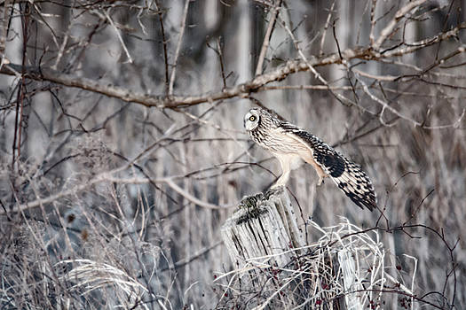 Ready for Take Off by Tracy Winter