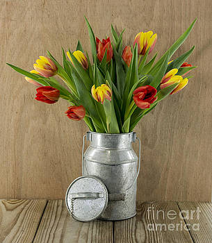 Compuinfoto  - red and yellow tulips on wood