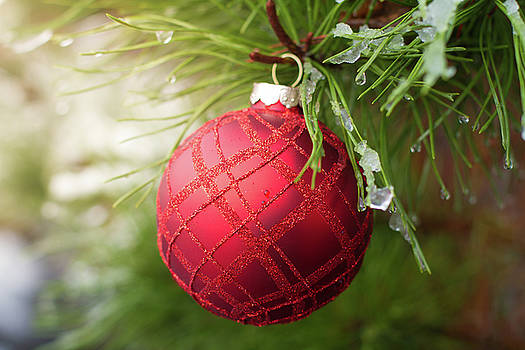 Red Christmas ball on icy evergreen leaves by William Lee
