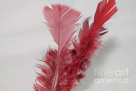 Red Feather by Elvira Ladocki