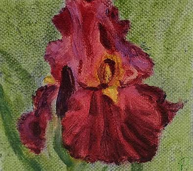 Red Iris by Paula Emery