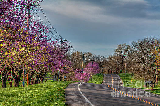 Larry Braun - Redbuds on a Road