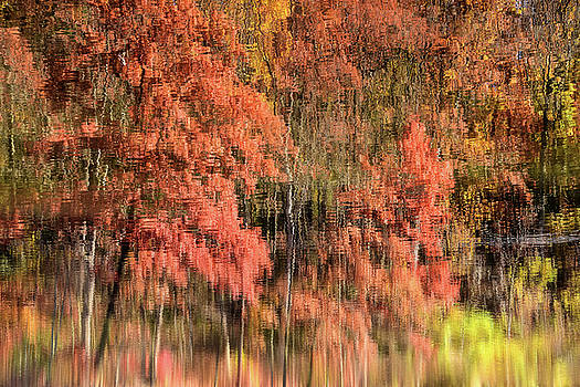 Reflections Of Fall by Dan Myers
