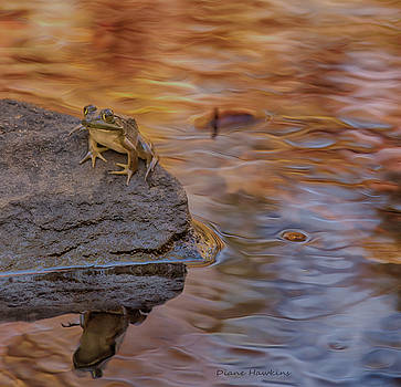 Reflections Of Fall by Diane Hawkins