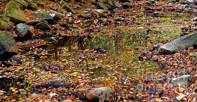 Paul Mashburn - Reflections Of Fall