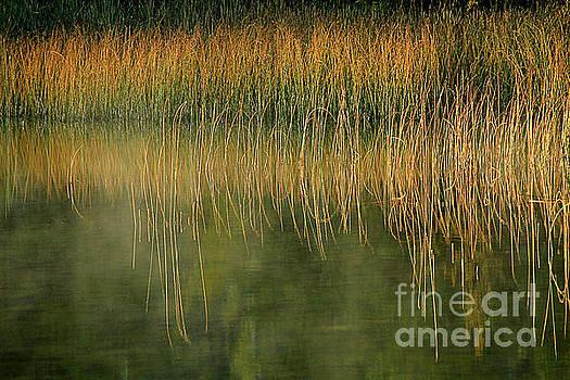 Roland Stanke - Reflective Reeds