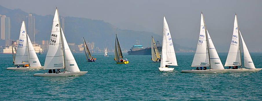 Regatta at the Harbour by Caroline Reyes-Loughrey