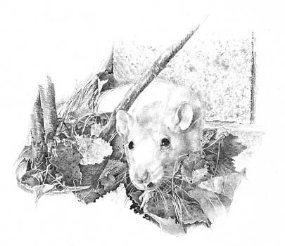Reggie the Rat by Judith Angell Meyer