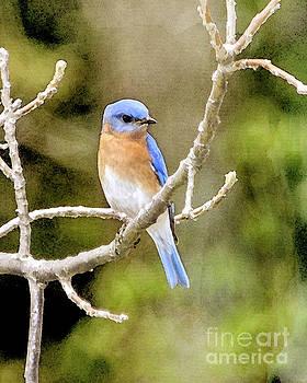 Rhapsody in Blue by Betty LaRue