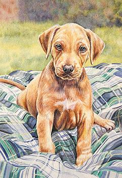 Rhodesian Ridgeback Puppy by Gail Dolphin