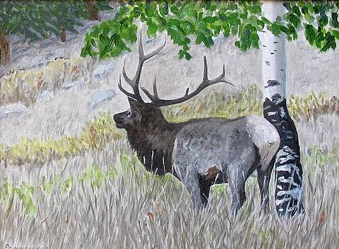 Rocky Mountain Elk by Barb Pennypacker