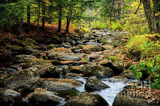 Rocky Stream by Alana Ranney
