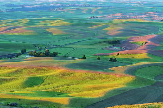 Rolling wheat field - Palouse by Hisao Mogi
