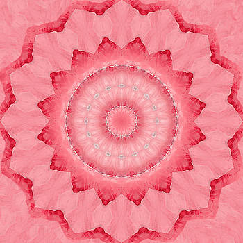 Rose by Elizabeth Lock