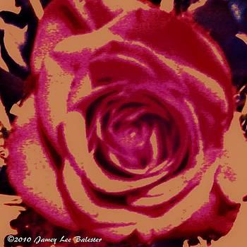 Rose by Jamey Balester