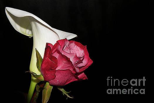 Rose With Calla by Elvira Ladocki