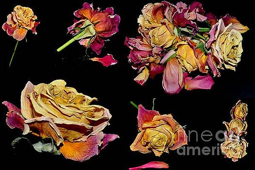 Roses by Sylvie Leandre