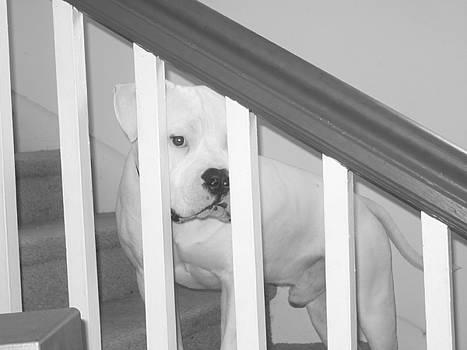Sad Puppy by Emma Sechrest