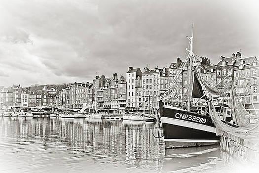 Safe Harbor by Catherine Alfidi