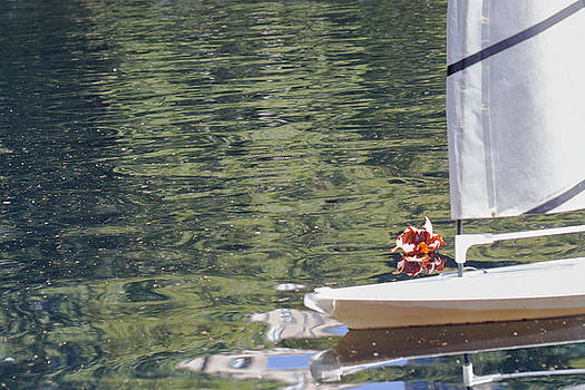 Sailing  by Silvia Bruno