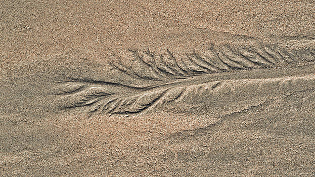 Steven Ralser - Sand Patterns on the Beach 2
