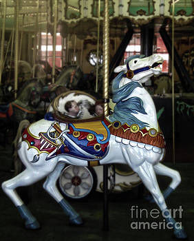 Gregory Dyer - Santa Cruz Boardwalk Carousel Horse
