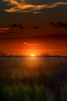 Sawgrass Sunset by Mark Andrew Thomas