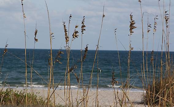 Sea Oats by Cheri Carman